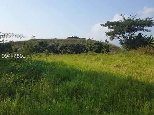 ขายที่ดินหนองควายใกล้วัดป่าสักสันอุไร 2 แปลงติดกันแยกแปลงขายหรือเหมาหมด