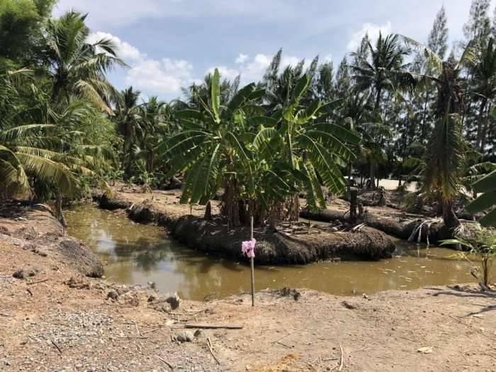 ขายที่ดิน 6ไร่1งาน76ตรว ติดแม่น้ำบางประกง ใกล้วัดสมาน