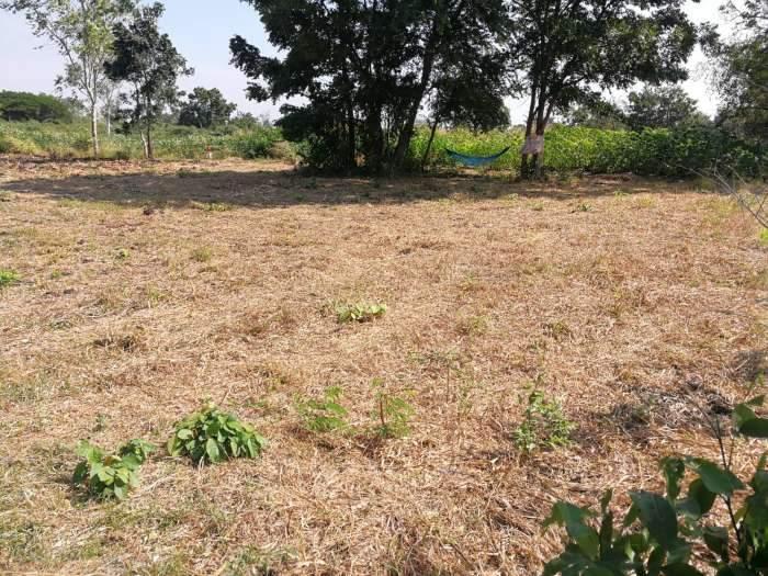 ขายที่ดิน 3แปลง ในหมู่บ้านโพนทอง ต.ชัยบาดาล อ.ชัยบาดาล จ.ลพบุรี