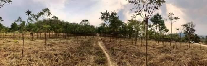 ขายด่วน ที่ดินไทรโยค กาญจนบุรี